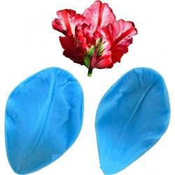 Вайнер тюльпан малий